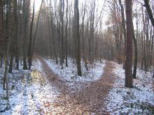 diverging paths in a snowy forest